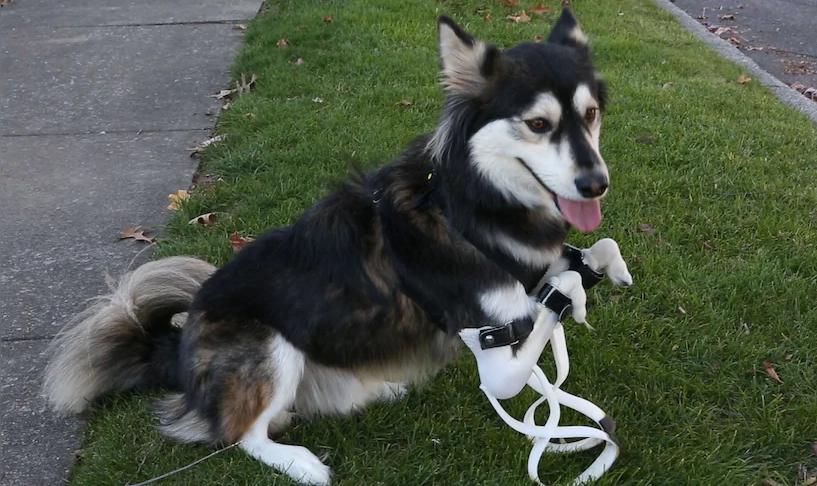 한국기술_3D 프린터_활용사례_헬스케어_강아지 Derby를 위한 두번째 의족_tn.png